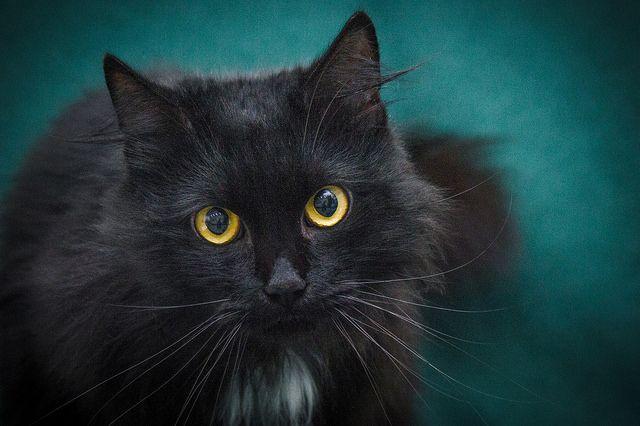 Ищет дом котик Мурзик