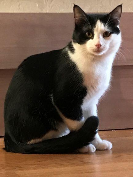 Ищет дом кот-семьянин Мурзик