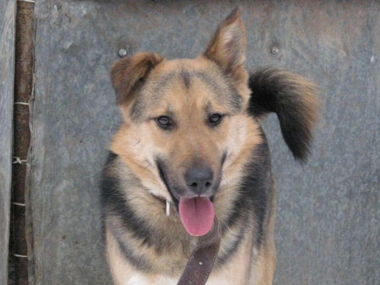 Собака Тимофей - самая собаческая собака на свете