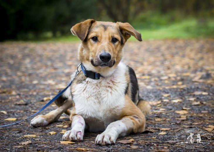 Невероятный пёс Бэн ищет дом