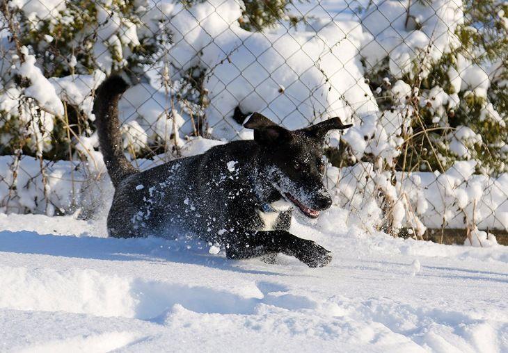 Евочка-девочка: подарок судьбы в год собаки