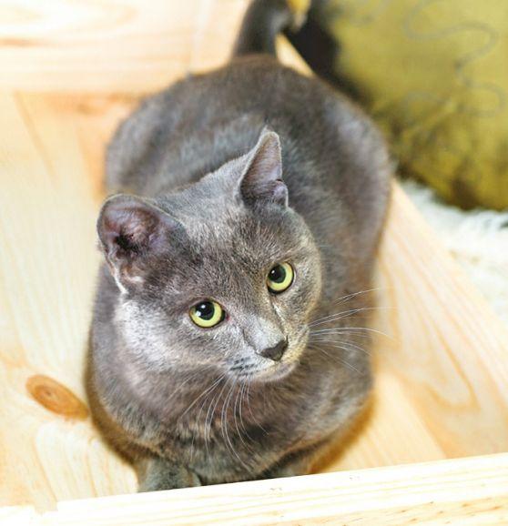 Красивый юный котик Чейз ищет дом
