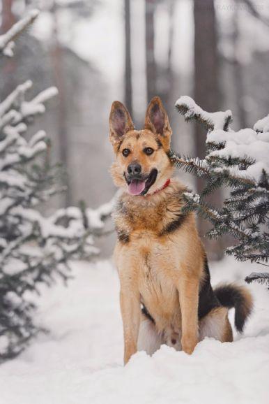 Пёс Бруно в добрые руки