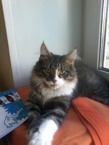 Шикарный 10 месячный котик Брюс в добрые руки