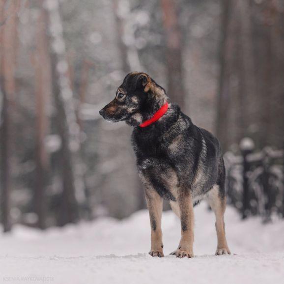 Трепетная собака Варя в добрые руки