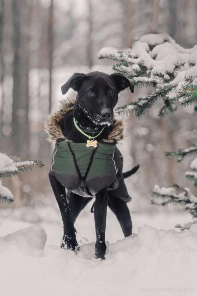 Ищет дом самая чудесная собака Ирада