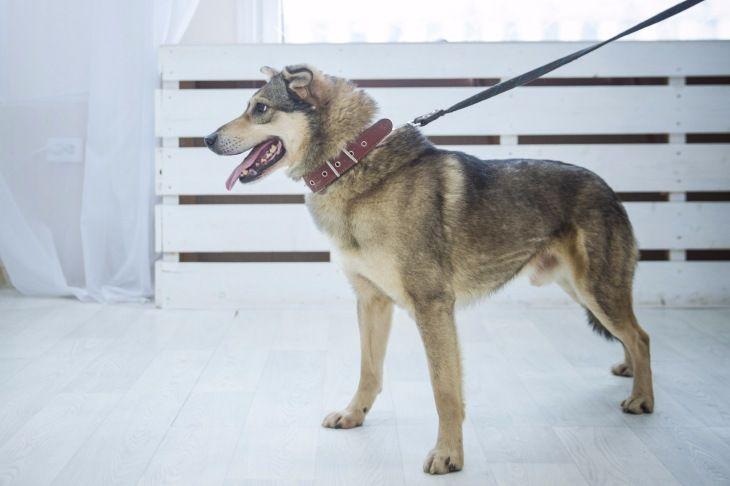 Нежный ласковый пёс Патрик ищет дом