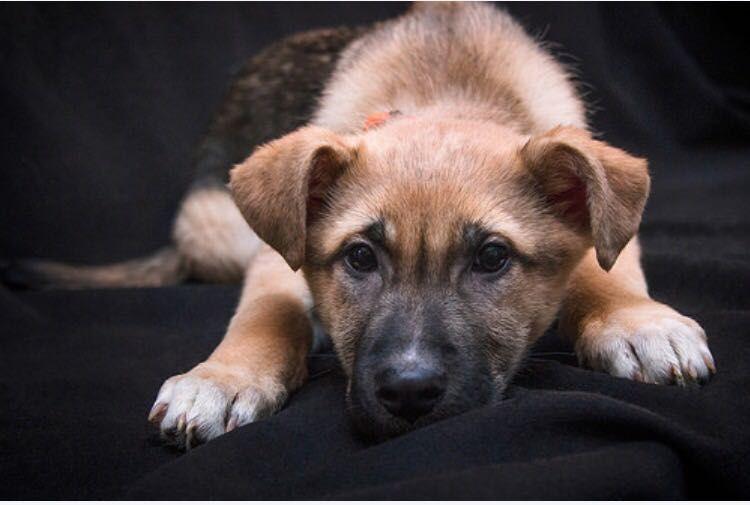 Трепетный и скромный щенок по имени Майк ищет дом