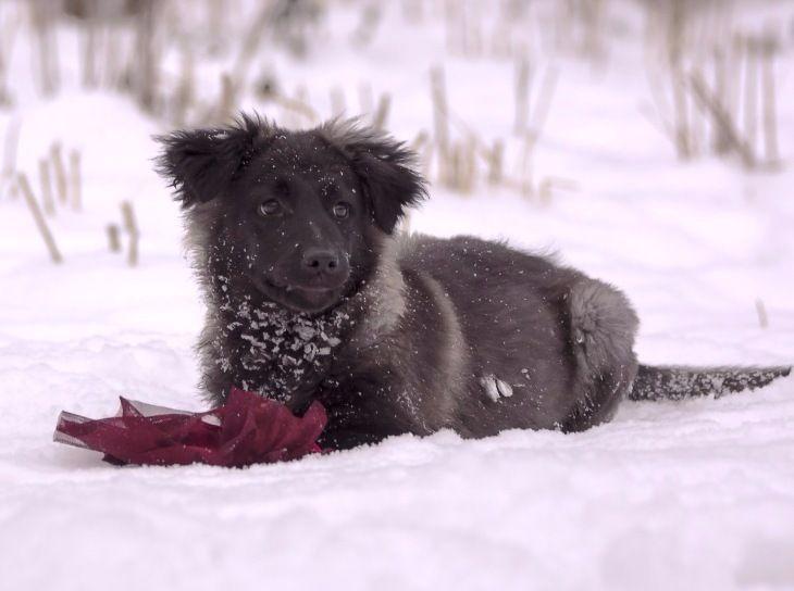 Красивый щенок Саманта ищет дом