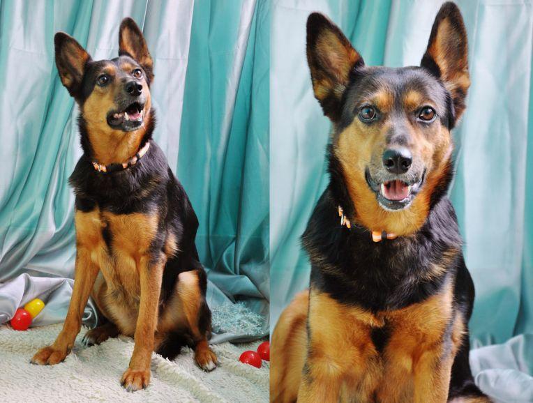 Собака Эльза - доброе сердечко, в поиске хозяев