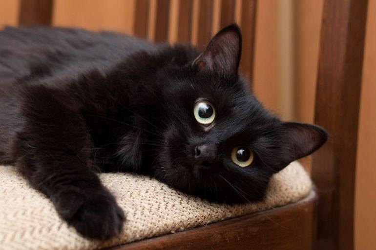 Мягкий, рыхлый, тёплый котик Дюшес ищет дом