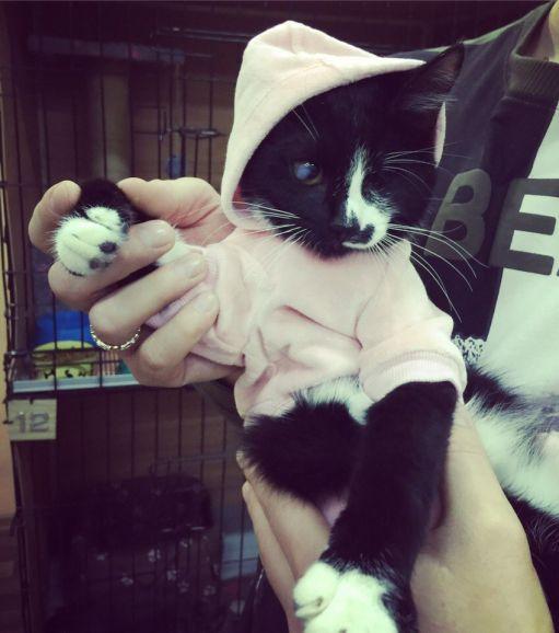 Котёнок Бусинка ищет дом