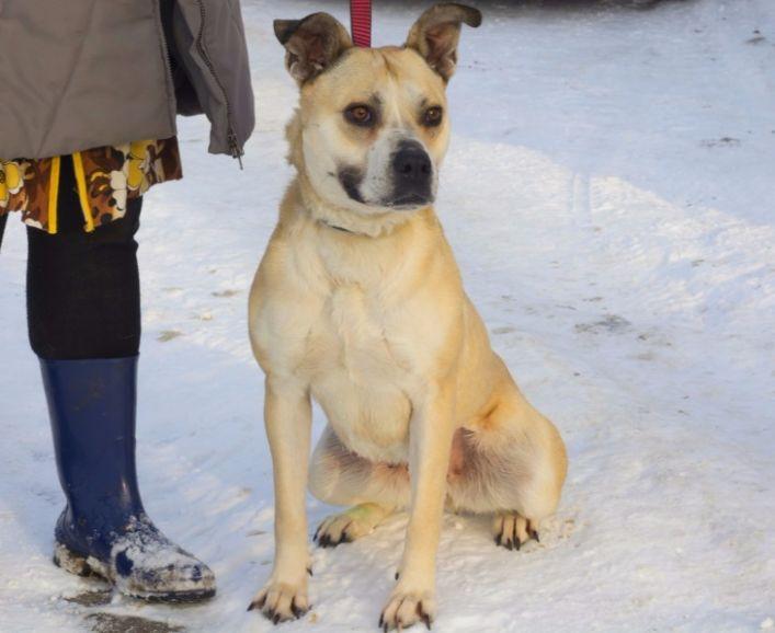 Ищет дом удивительно умная собака-улыбака