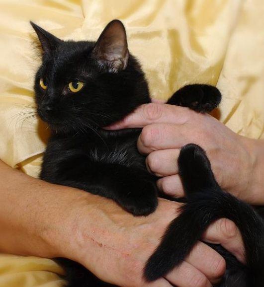 Черныш - котик Изюм ищет заботливых хозяев