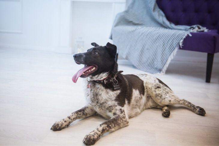 Красивая собака Тори ищет семью