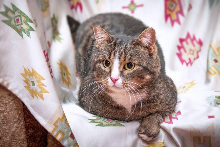 Упитанный и воспитанный котик Тиша ищет дом