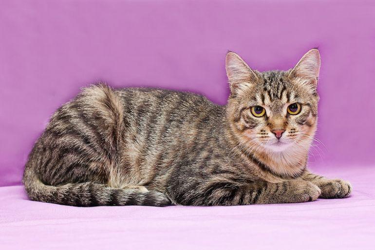 Котёнок Тишка в дар