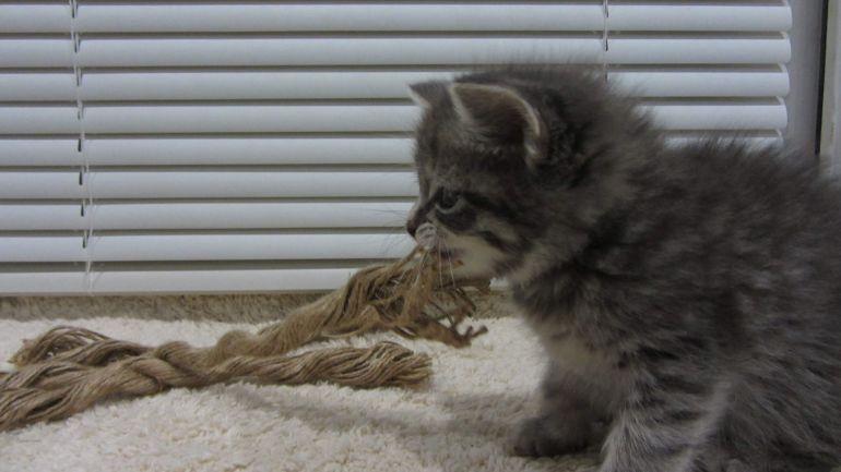 Обаятельный котёнок - мальчик