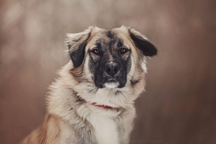 Красивый, молодой пёс в добрые руки