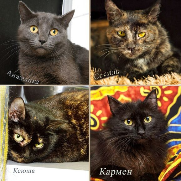 Кошки-бояки из приюта. Шанс найти дом