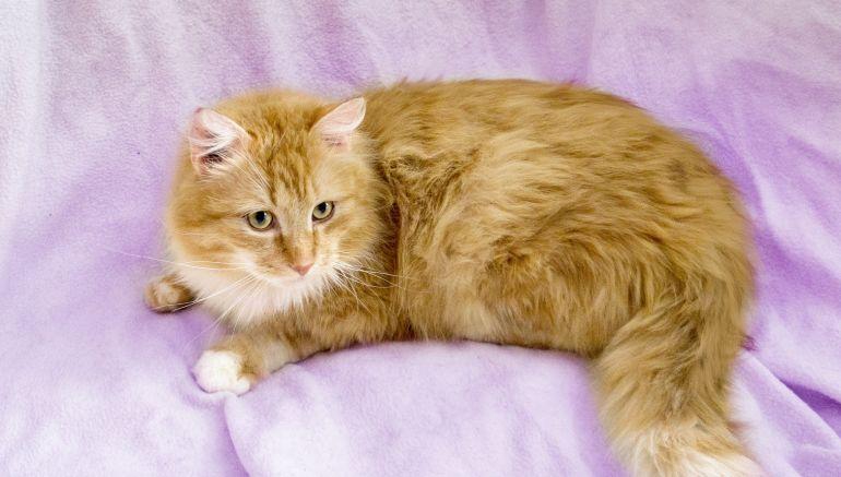 Личность с харизмой кот Портос ищет дом