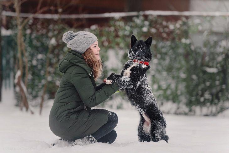Маленькая собака Нора в добрые руки