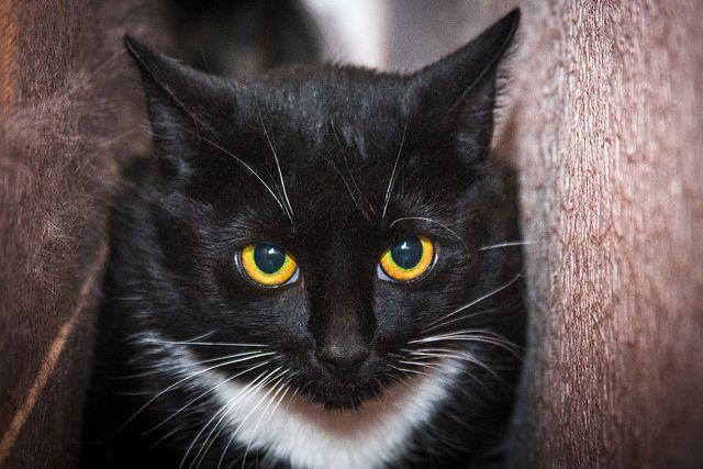 Кошечка-трусишка ищет дом