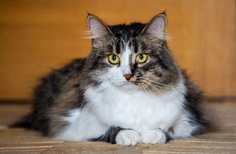 Кошечка Алиса ищет дом