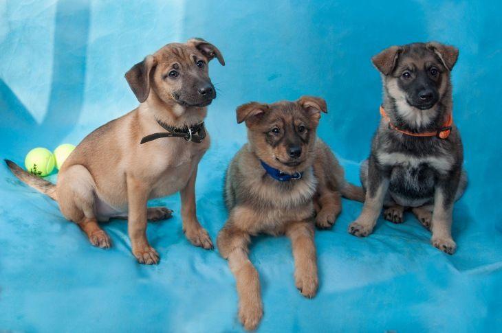 Ищут семью трое щенков
