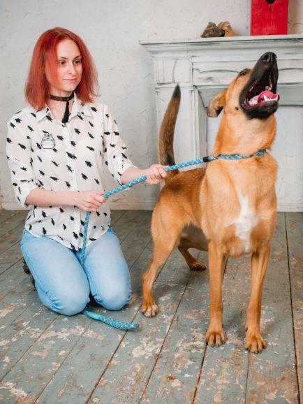 Собака Тори ищет дом