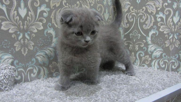 Плюшевый вислоухий котёнок - мальчик