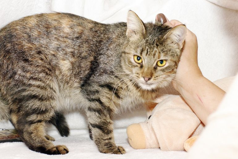 Некрасивая кошка ищет дом и семью