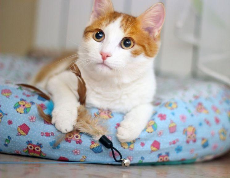 Нежный рыжик котёнок Ёшка ищет дом