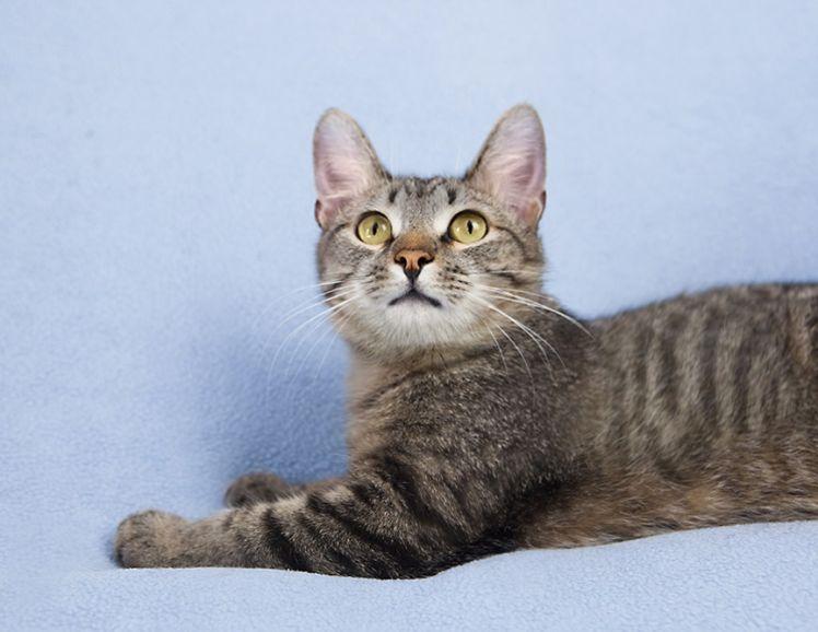 Котёнок девочка звездочка-Феруза в дар