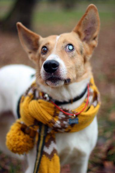 Зорко одно лишь сердце, особенный пёс Саймон ищет семью