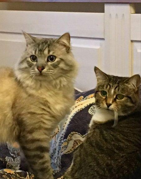 Муся и Дымок ищут новый дом