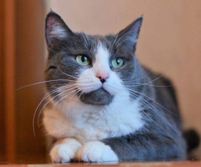 Кошечка мурлыка Барса ищет дом