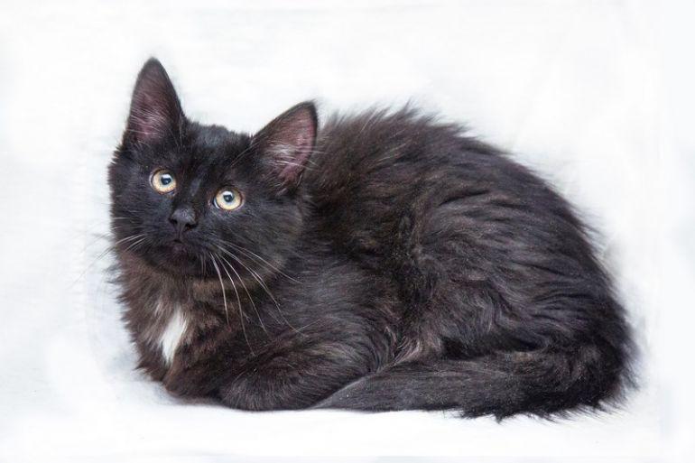 Ищет дом котёнок по имени Маугли