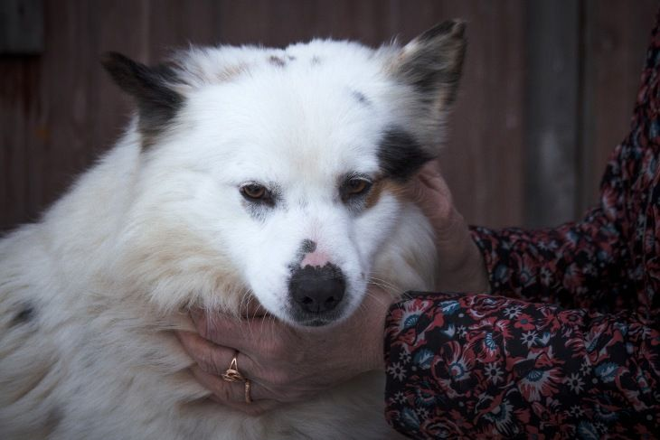 Молодой пёс Бублик ищет дом