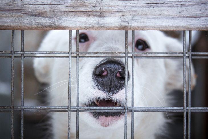 Очаровательная собачка Сима в добрые руки