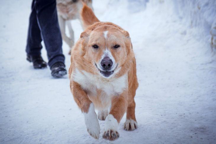 Чудесная собачка Злата ищет дом
