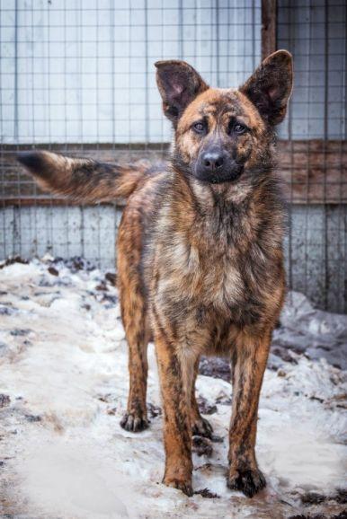 Красивый щенок-подросток ищет дом
