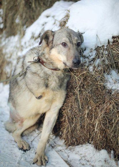 Дик - особенный пёс в ожидании любящего хозяина