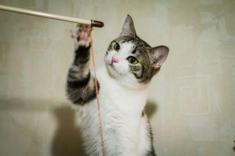 Ищет хозяина котик Ежка