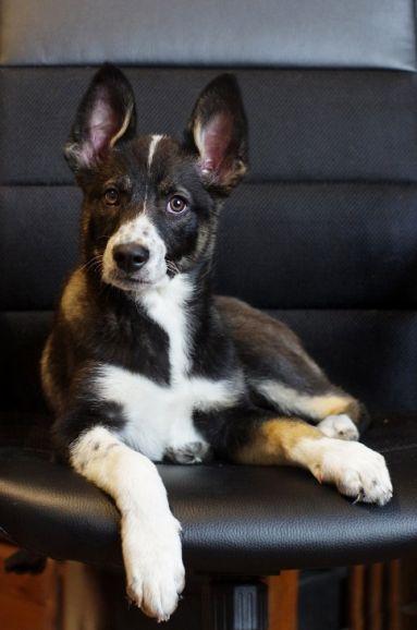 Красивый щенок в добрые руки