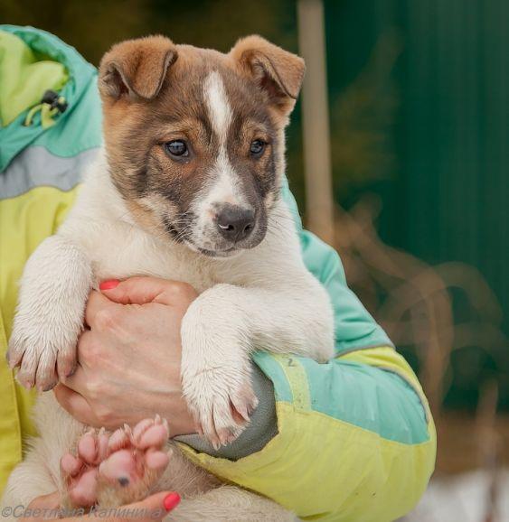 Великолепный щенок Джек ищет дом