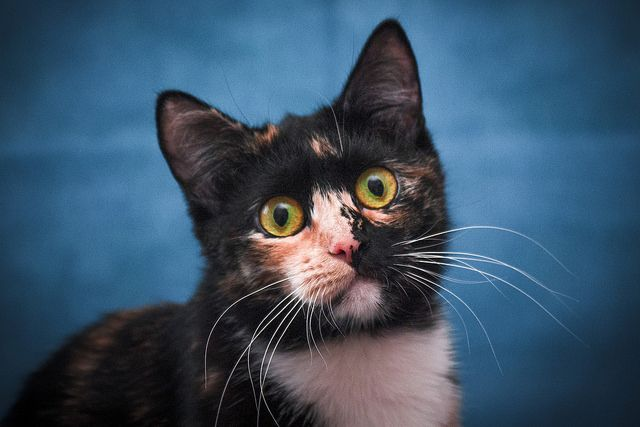 Кошка Сова ищет семью, в добрые руки