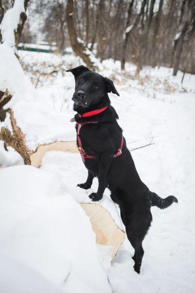 Молодой пёс Фрейд ищет дом