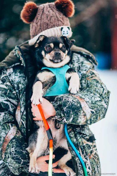 Маленький пёсик Малыш с непростой судьбой ищет дом