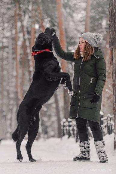 Крупный пёс в добрые руки